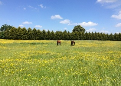 The Paddocks with Resident Horses